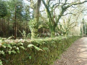 Green_Rock_Wall_along_Camino_de_Santiago