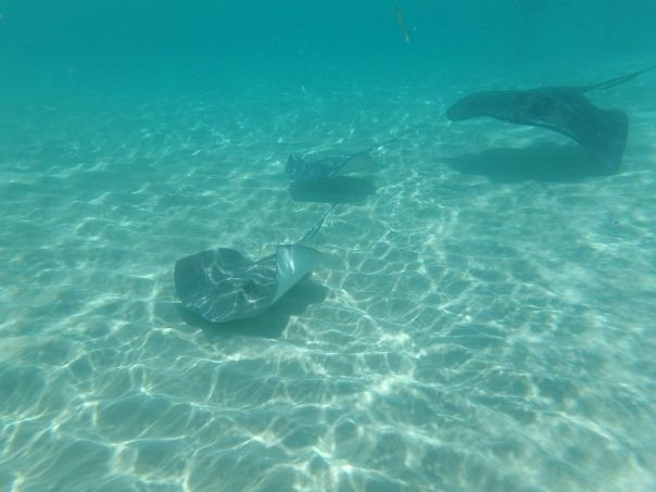 Stingray_City_Grand_Cayman