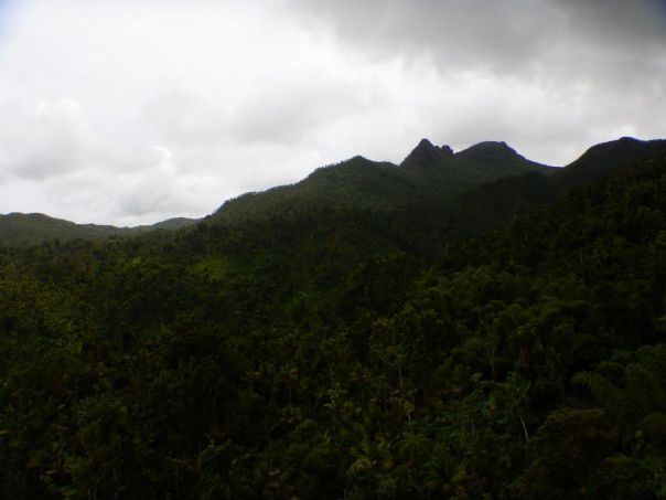 Lush_Landscape_of_el_Yunque_National_Forest_by_author_Heidi_Siefkas