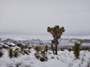 Snow_In_Joshua_Tree_National_Park_by_Heidi_Siefkas