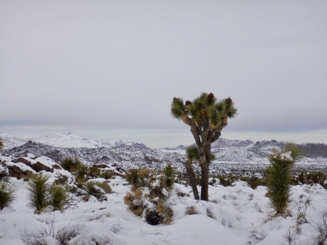 Look Up – It's Snowing in Joshua Tree National Park