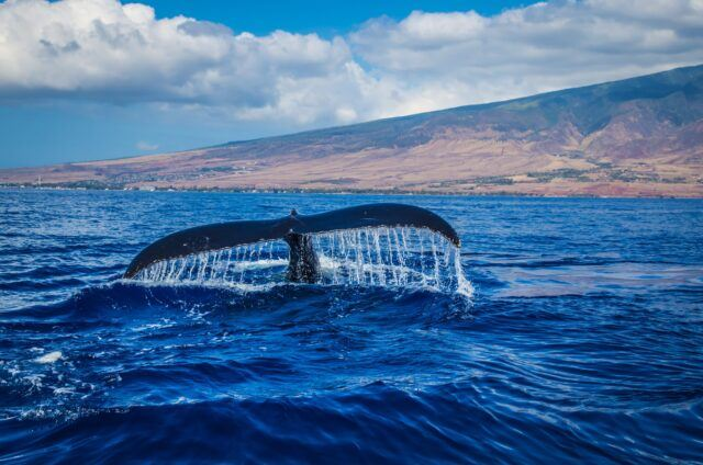 Look Up Reminder from Humpback Whales