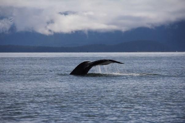 Whale-Watching-Alaska