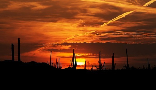 sunset-sonoran-desert-arizona