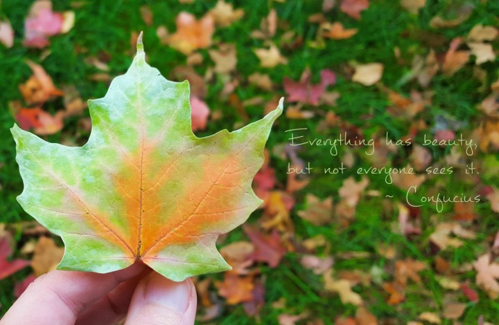"""Confucius quote """"Everything has beauty, but not everyone sees it"""" with fall leaf"""