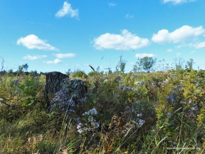 Prairie returns to St. Croix State Park