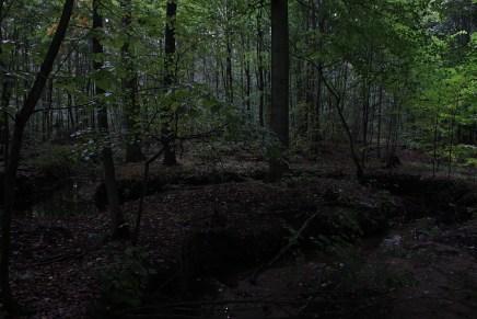 Der düstere Leinawald