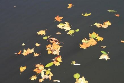 Herbst_Saale