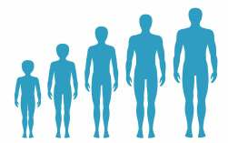 height growth hormone