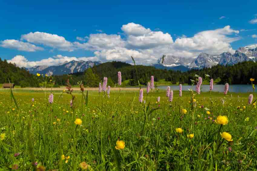 Blühende Wiesen am Geroldsee