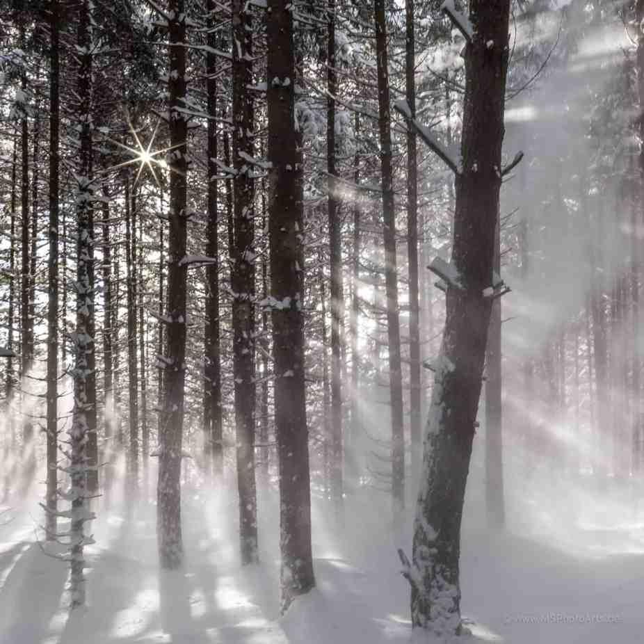 Schneegestöber im winterlicher Wald bei Barmsee