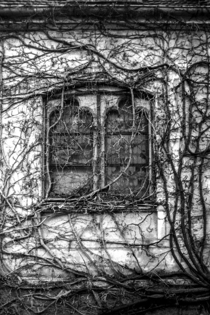 Das Fenster.