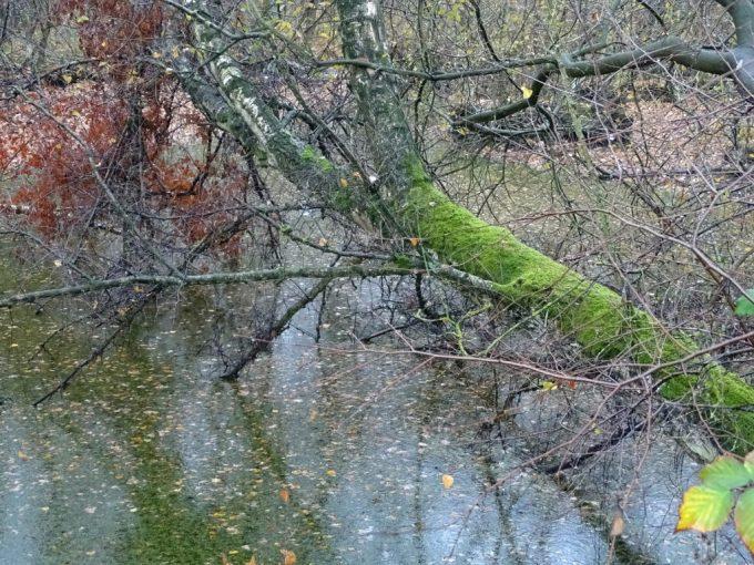 Umgefallen Bäume im Wassergraben