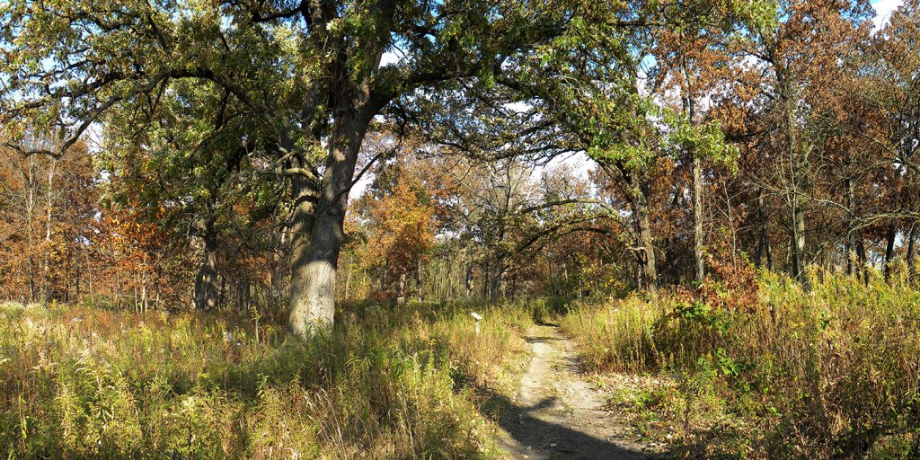 Bur Oak Woods Nature Preserve