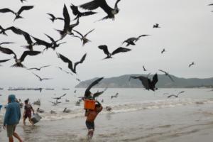 Fregattvögel schnappen sich ein Stück