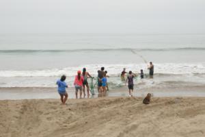 ein Riesennetz wird vom Strand eingezogen