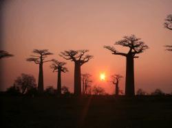 バオバブ並木の夕陽