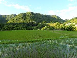 日根荘の美しい田園風景