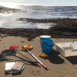 Bild på material vid en exkursion till stranden: håvar, hinkar och böcker