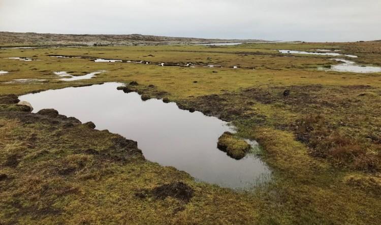 Årnäsuddens naturreservat, strandäng