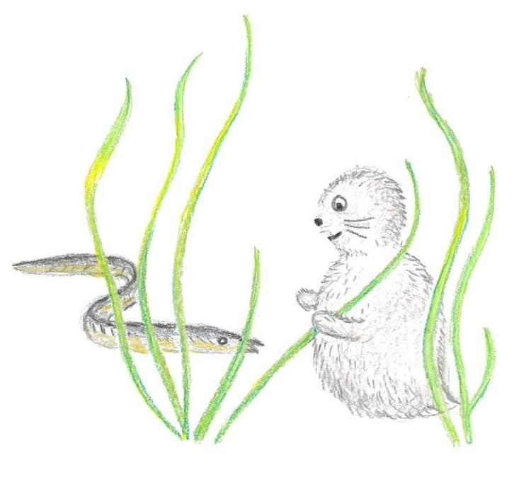 Noriko och ålgräs, Zostera marina