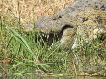 67_Croc