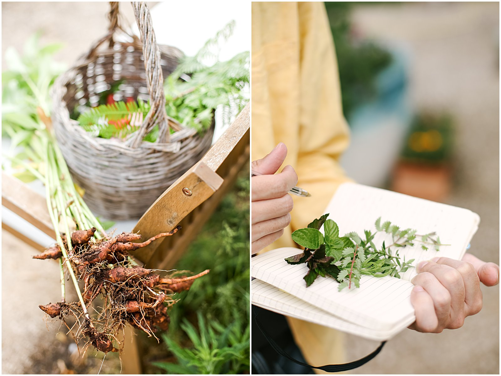 Local herbs and plants at a vegetarian cooking class in Rome