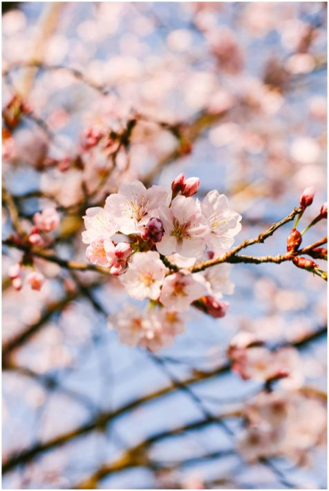 Helena-Woods-Spring-Blossoms-Clean-Heart-Simple-Joys-Blog_0563