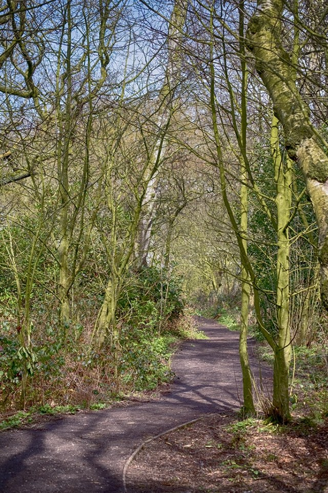 Woodland Path (Mere Sands Wood)