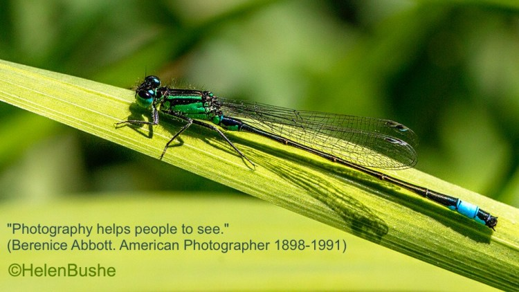 blue-tailed Damselfly berenice Abbott quote