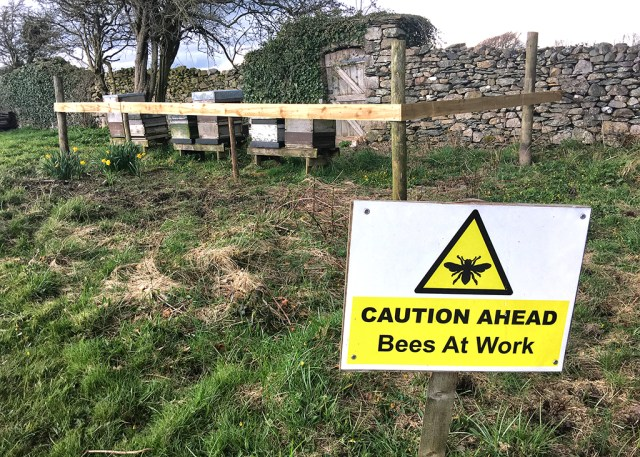 Bees at Work Swarthmoor Hall Cumbria
