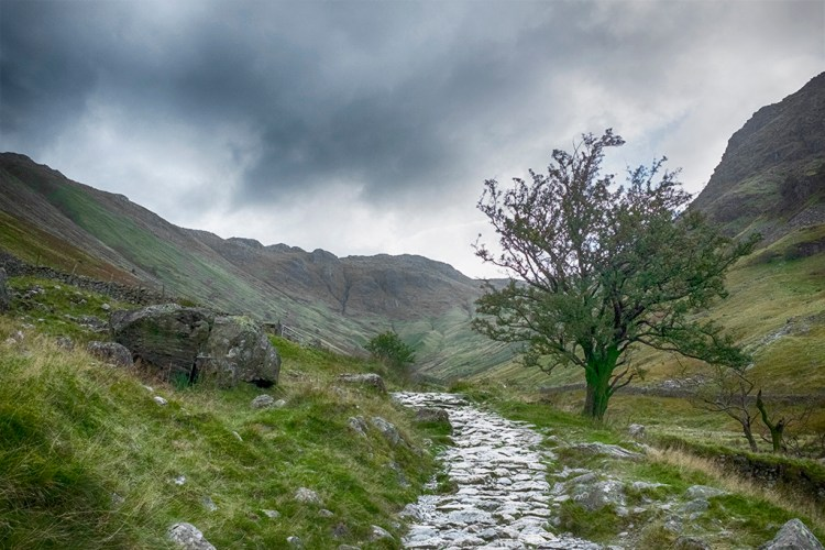 Between a Rock and a Tree Borrowdale valley