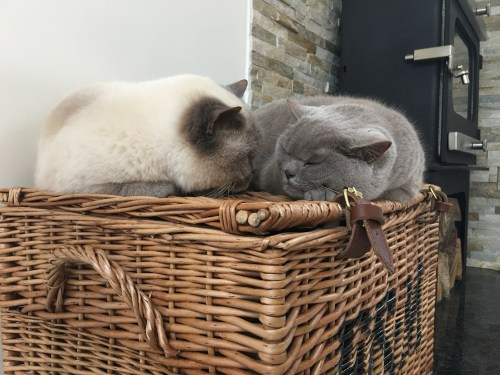 Asleep on Hamper cats British Shorthair