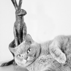 Misty & Hare monochrome cat pet