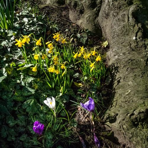 Spring Flowers Woodplumpton Lancashire