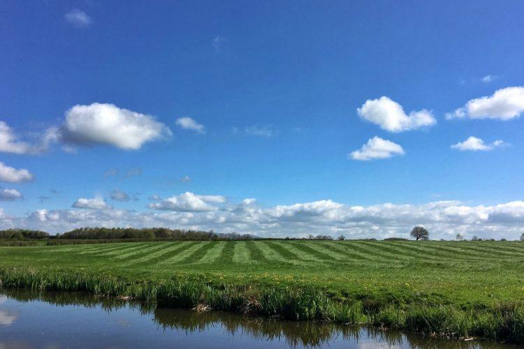 Striped Grass Lancaster Canal