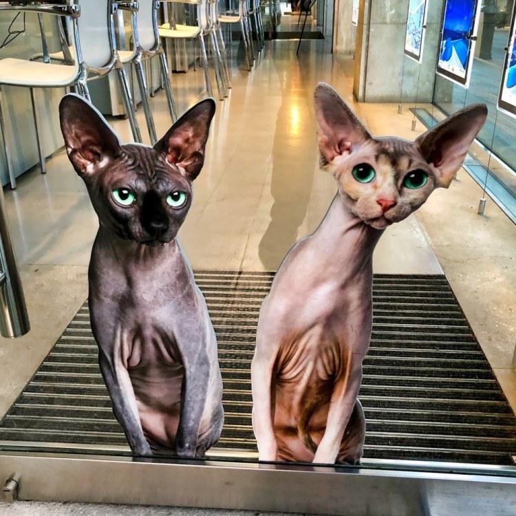 cats palma pedigree homes iphoneography palma