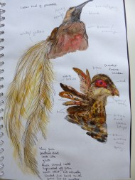 Sketchbook page, study for Icarus project