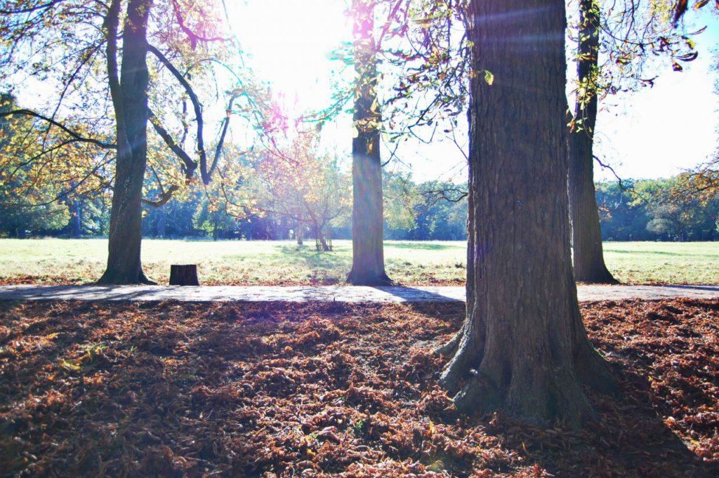 leaves_ludwigsburg