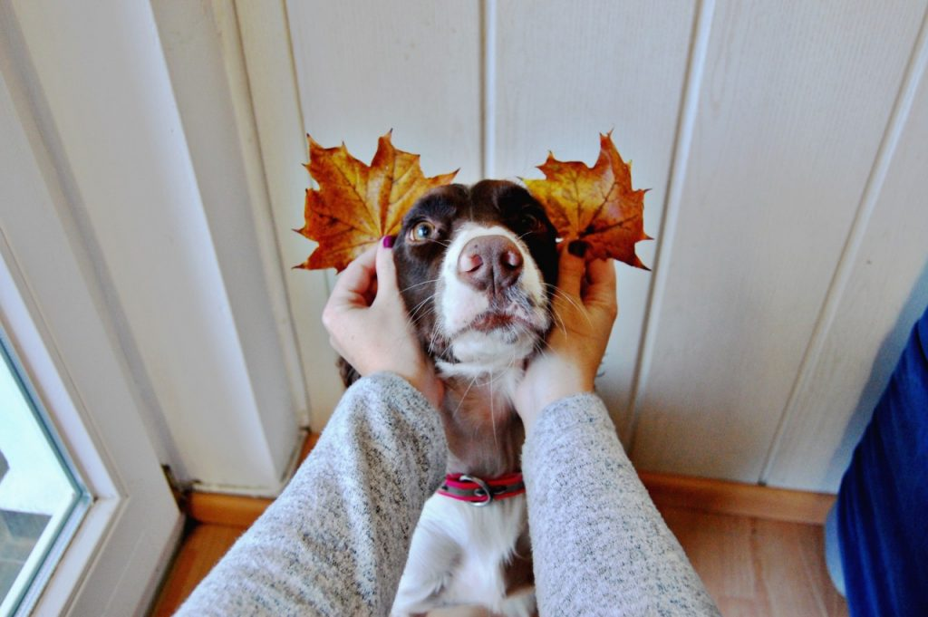 millie_leaf_ears