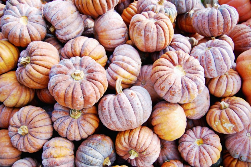 pumpkins_purple