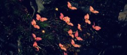 cropped-butterfly_buds_by_waitingforfuntocome-d82dppu.jpg