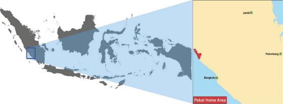 Pekal People of Indonesia
