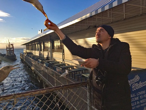 A seagull grabs a french fry from Sanjar Said's outstretched hand on Seattle's waterfront February 17, 2018