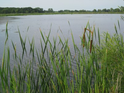 A cherished destination: Horicon Marsh Wildlife Refuge - 30,000-acre sanctuary for migratory birds.