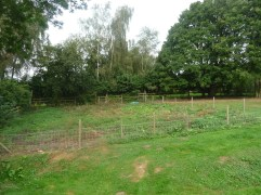 Hen Orchard [BEFORE]. After a little weed clearing.