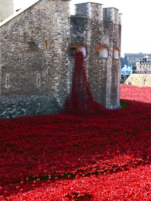 Tower poppies 14