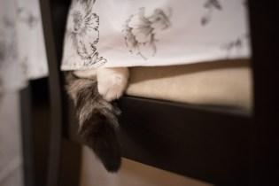 Å være katt betyr at jeg kan late meg hele dagen om jeg ønsker.