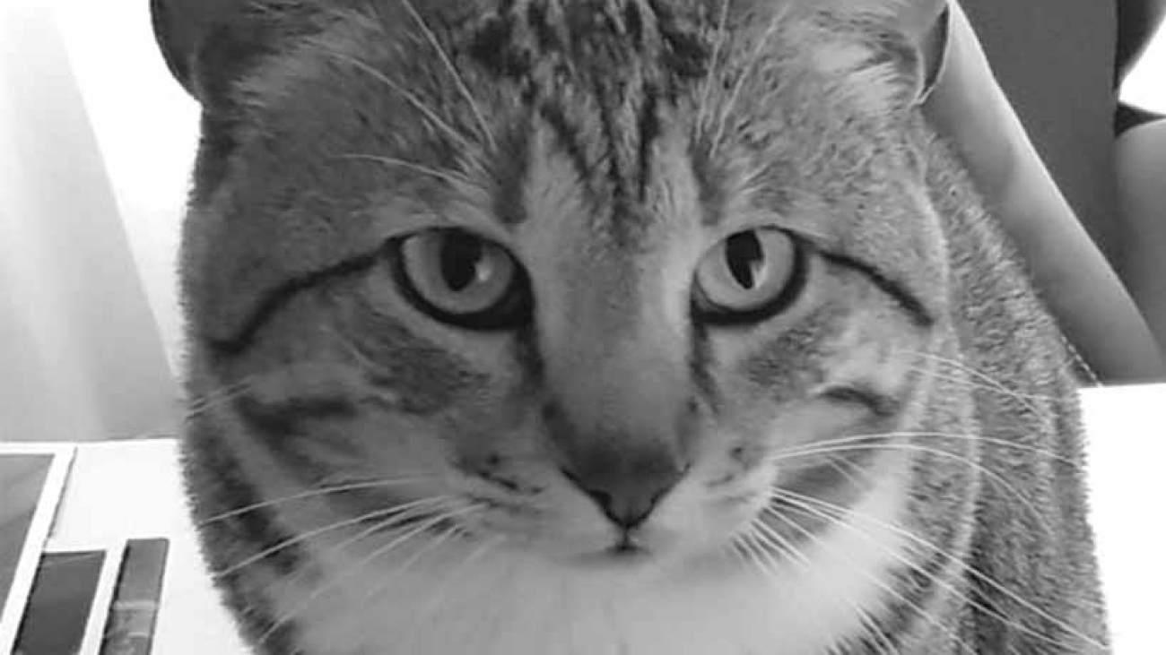 hélio-cabral-marketeer-niko-publicitário-preto-e-branco