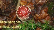 7-decouverte-milieu-naturel